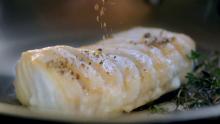 Agama Seafish